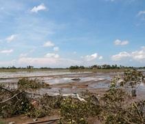 吉打尤侖颳起陸龍捲,許多房子的屋頂鋅板都被吹走散落在稻田裡。【攝影者:尤靜蓓(慮忱)】